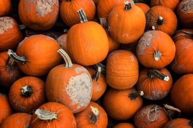 jason-b-graham-produce-pumpkin-kabak-0002