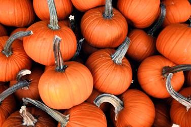 jason-b-graham-produce-pumpkin-kabak-0006