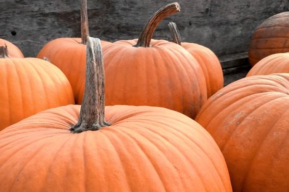 jason-b-graham-produce-pumpkin-kabak-0008