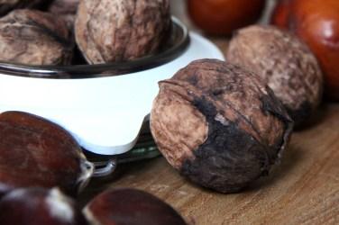 walnuts-ceviz-1948