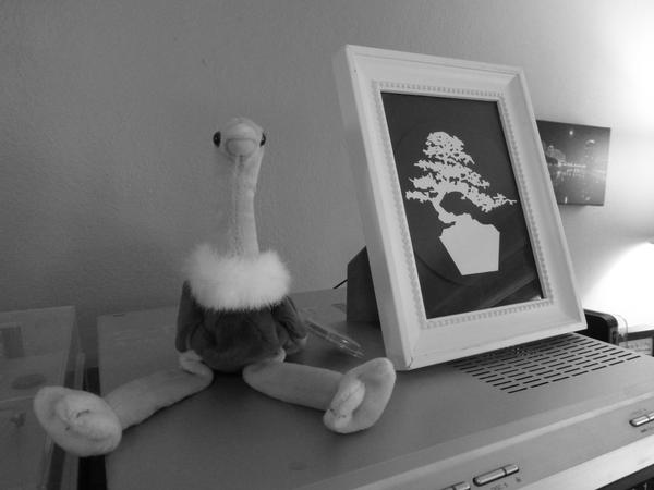 Ostrich Beanie Baby from Nancy Hamilton; bonsai tree image by Abby Massaro