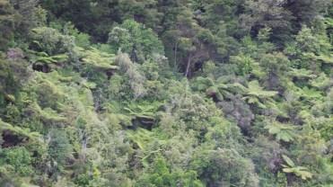 Giant Fern Trees