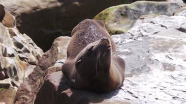 Seal relaxing in the sun