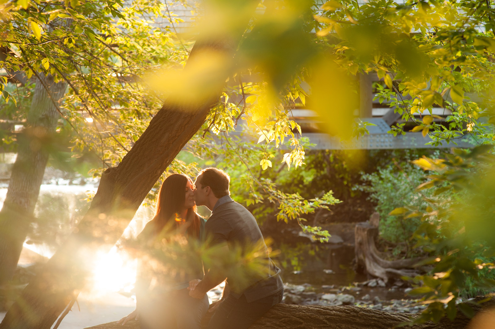 Engagement session couple sitting on a tree at sunset