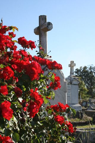 flowers at bega cemetery