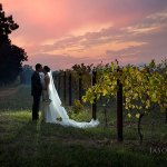 Bride and Groom in the vines at Sunset at Boynton's Feathertop Winery in Bright Victoria