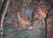 Dusk Deer
