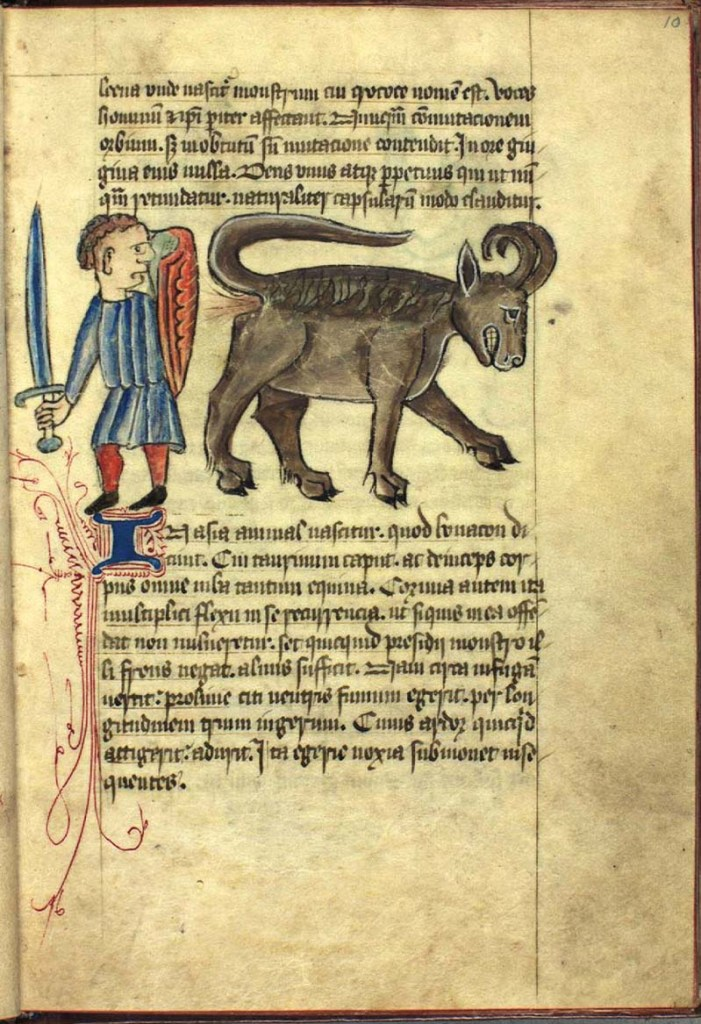 The Bonasus. From a 15th-century British bestiary, collection of the Royal Library (National Library of Denmark), Copenhagen