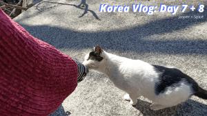 Korea Vlog  Day 7 8 300x169 - Travel Talk & Final Korea Vlogs!