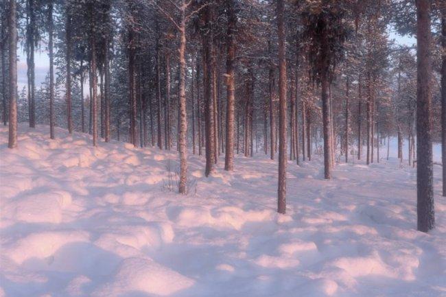 Renbetad mark om vintern