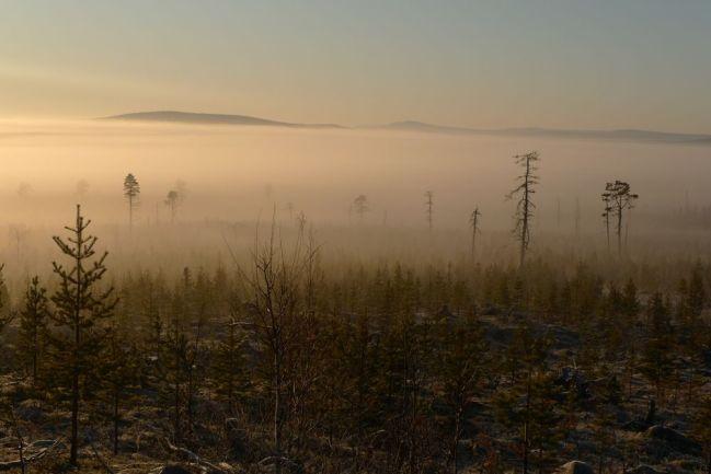 Dimma och sol över gammalt kalhygge