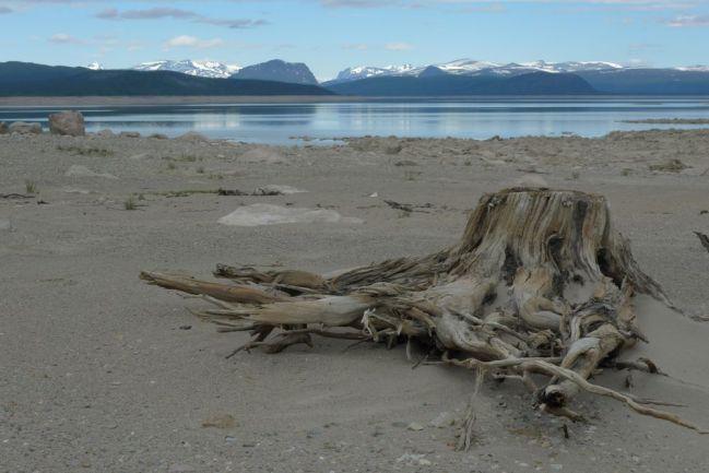 Tjaktajaure vid lågvatten. Gammal stubbe i förgrunden