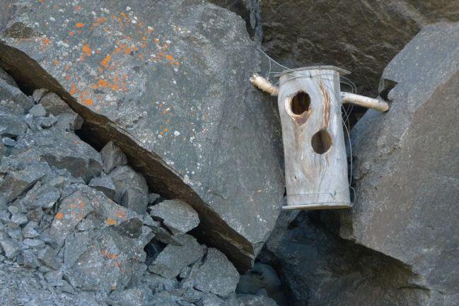 En sjöfågelholk med två hål mot en klippvägg