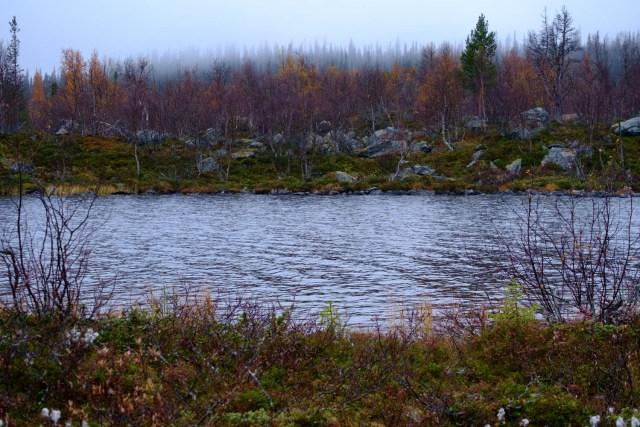 Senhöst i fjällnära skog. Dimma i skogen , träd med bara några löv och en del av en stor sjö. A