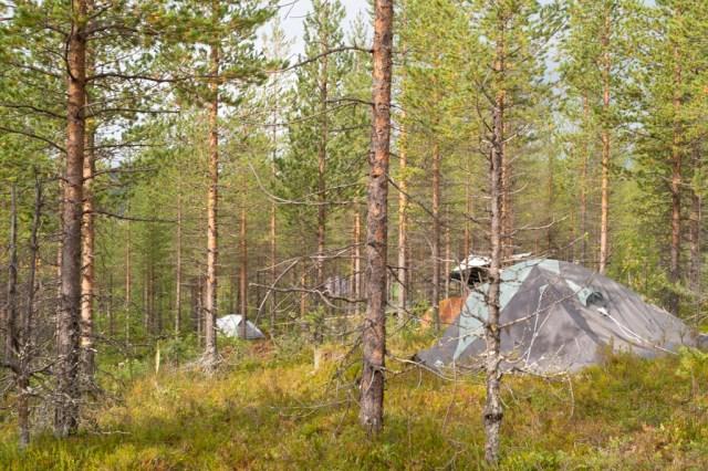 Tält i skogen