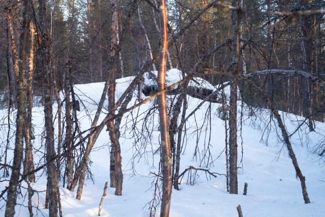 Tät björkskog, i bakgrunden skymtar en översnöad och raserad byggnad