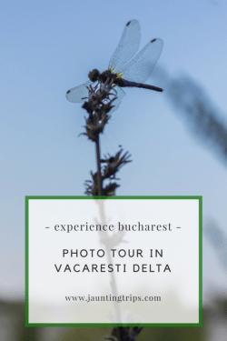 pin-vacaresti-delta-bucharest