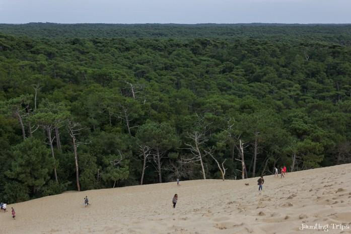 sand-forest-dune-pilat