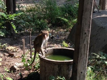 Saw a bunch of monkeys on the way to find the fields