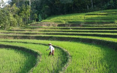 Tour: 7D 6N Java  (Yogyakarta, Bromo, Ijen, Village Tour)