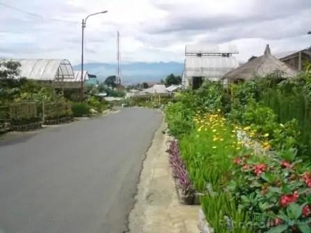 Menikmati Indahnya Hamparan Bunga di Cihideung Parongpong, tour bandung, wisata bandung