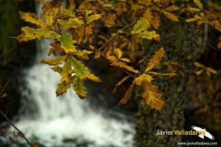 otoño 5