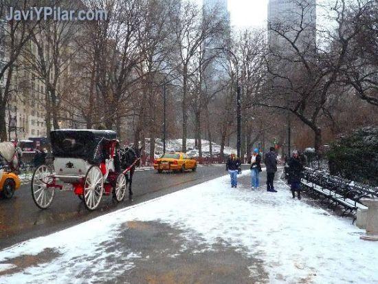 Calesas en Central Park nevado