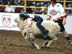 """Rodeo: prueba de """"mutton bustin'"""" con un niño montado en una oveja"""