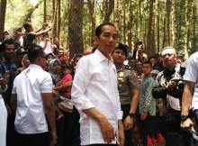 jokowi resmikan pembukaan festival kph