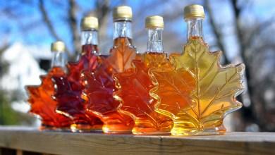 هل تذوقت شراب القيقب من قبل ؟ تعرف على طريقة استخراجه