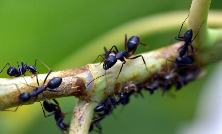شاهد كيف تبدو مستعمرات النمل من الداخل!