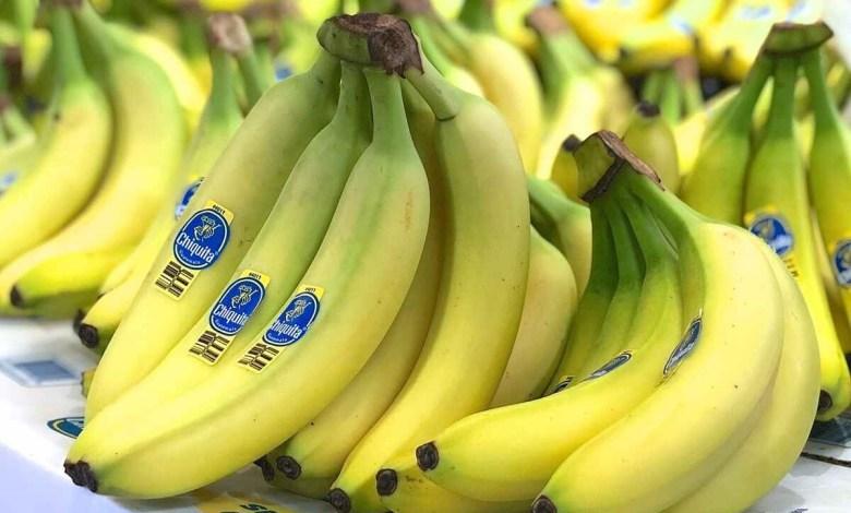 باحثون يحذرون.. هذه الدول ستختفي فيها أشجار الموز!
