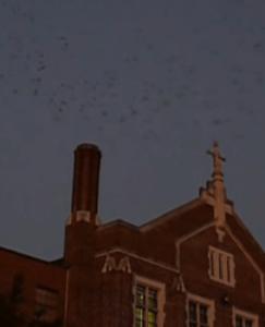chimeny swifts