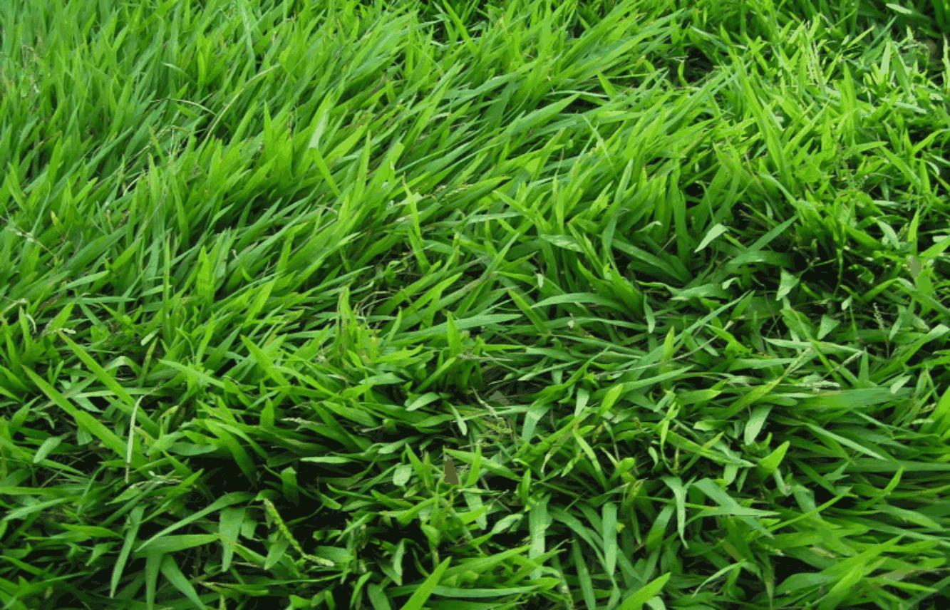 5 Cara Mudah Menanam Rumput Taman