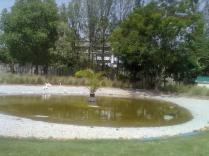 A beautiful pond with ducks :)