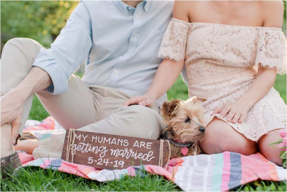 light and airy NJ weddings, incorporating pets into your engagement photos