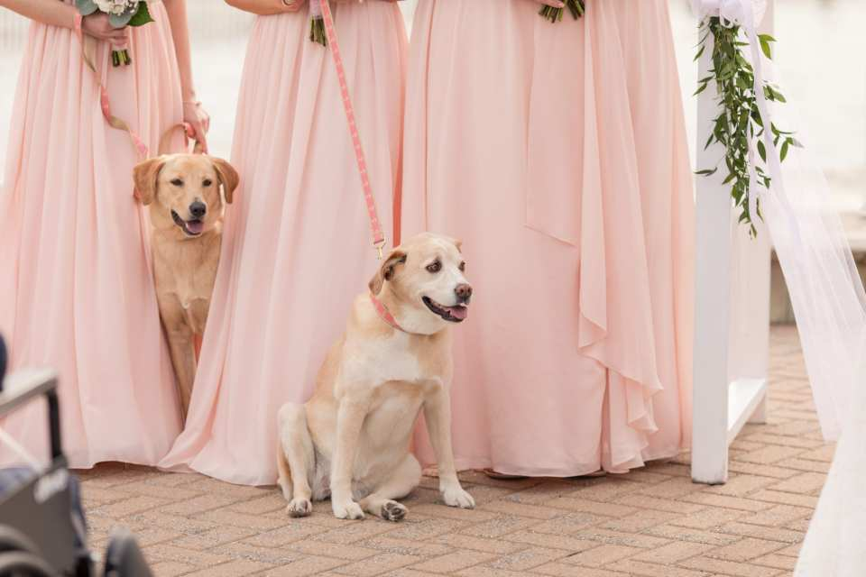 wedding with pets, pets in wedding, NJ wedding photographer