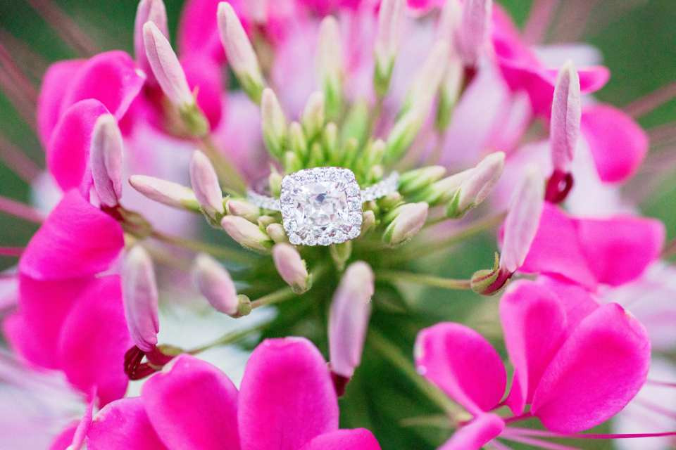halo diamond engagement ring, morven museum photos, princeton engagement