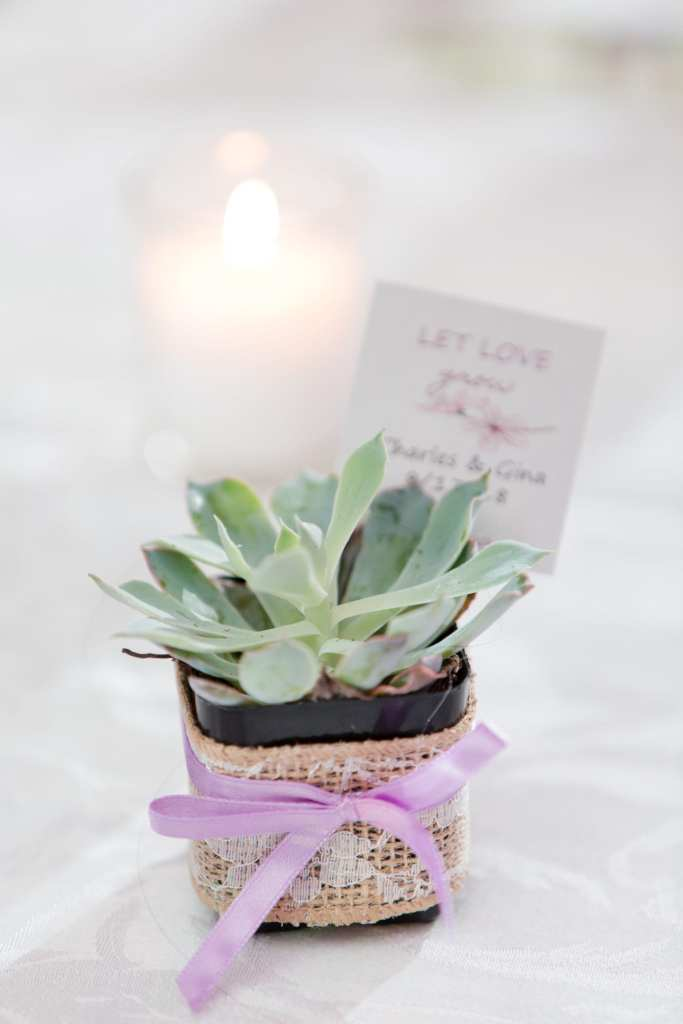 succulent wedding favor, let love grow wedding favor, unique wedding favor