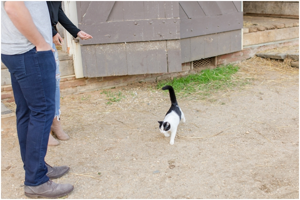 cat on farm, Longstreet Farm
