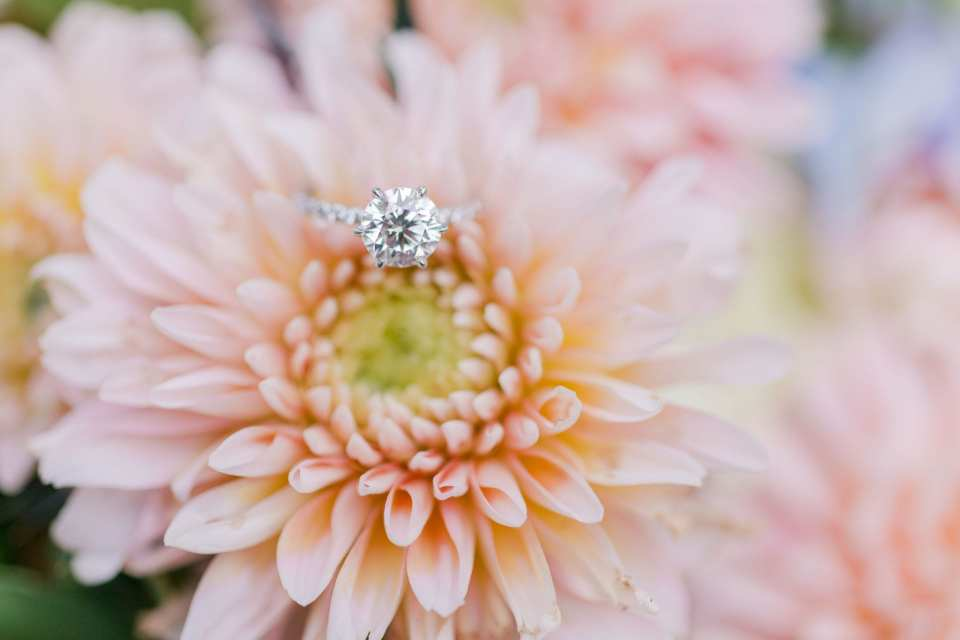 round diamond solitaire engagement ring on a diamond eternity band by Hamilton Jewelers sitting atop a peach flower