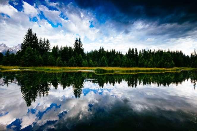 Teton Photo Adventures - Trees Water Edge Reflection Rain