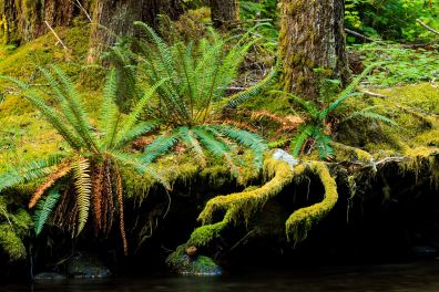 Olympic Photo Adventure - Trees Forest Mosses Trunks