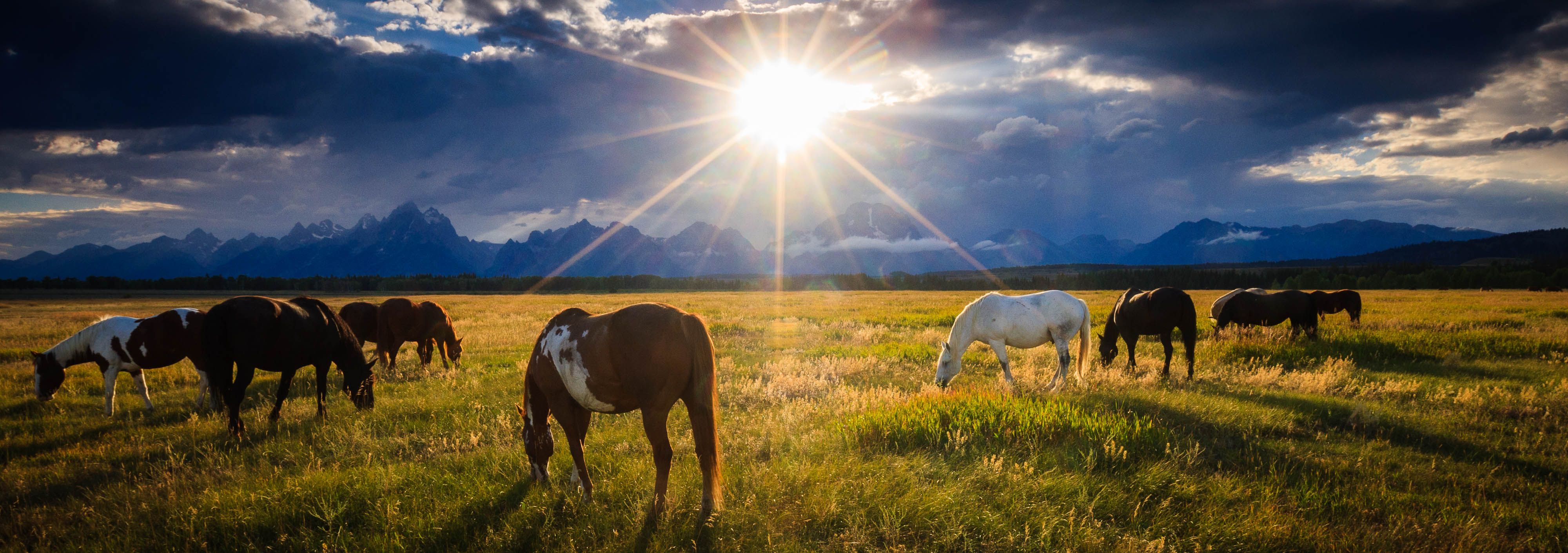 teton sunset horses limited-edition print by Jay Goodrich