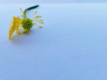 The Sad Flower I