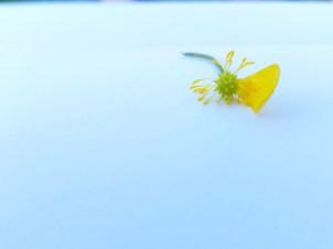 The Sad Flower II