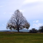 Tree at Antietam Nation Battlefield