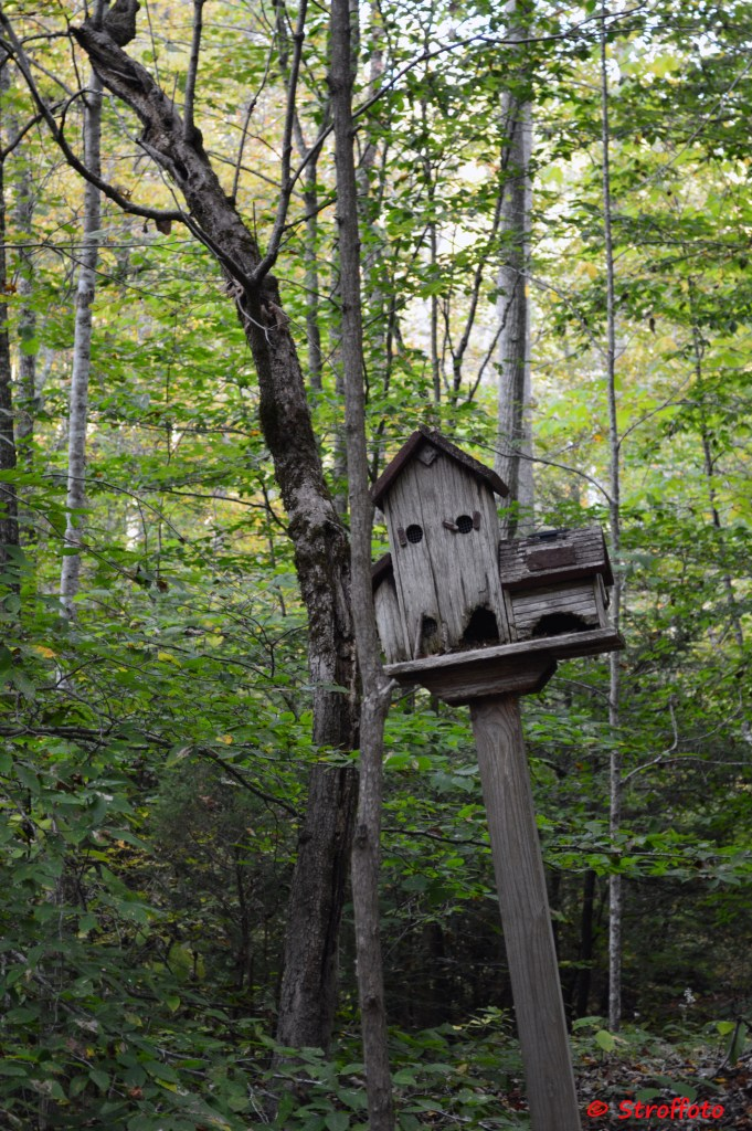Bat House in the Woods