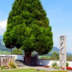 Beautiful Tree Behind the Roman Catholic Church in Giswil Switzerland