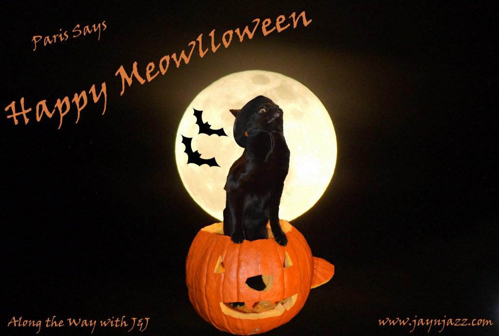 Happy Meowlloween!